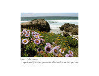 Monterey Coast with purple flowers